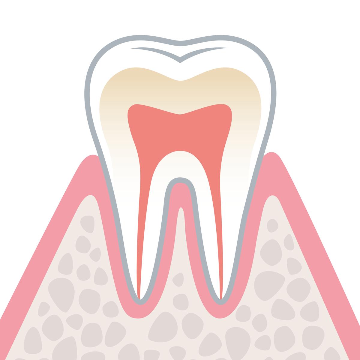 岡山県瀬戸内市内の歯医者 おさふねフレンド歯科 歯周病 健康な状態